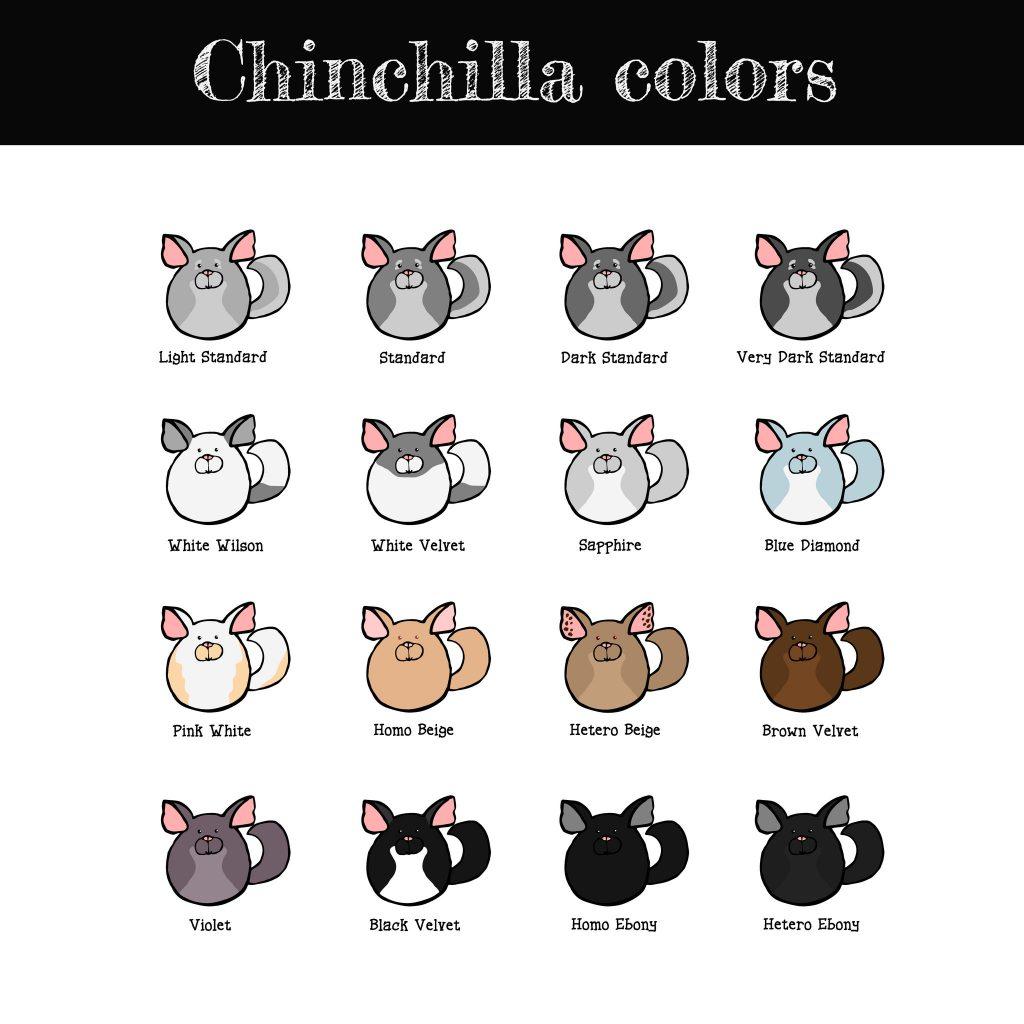 chinchilla colors