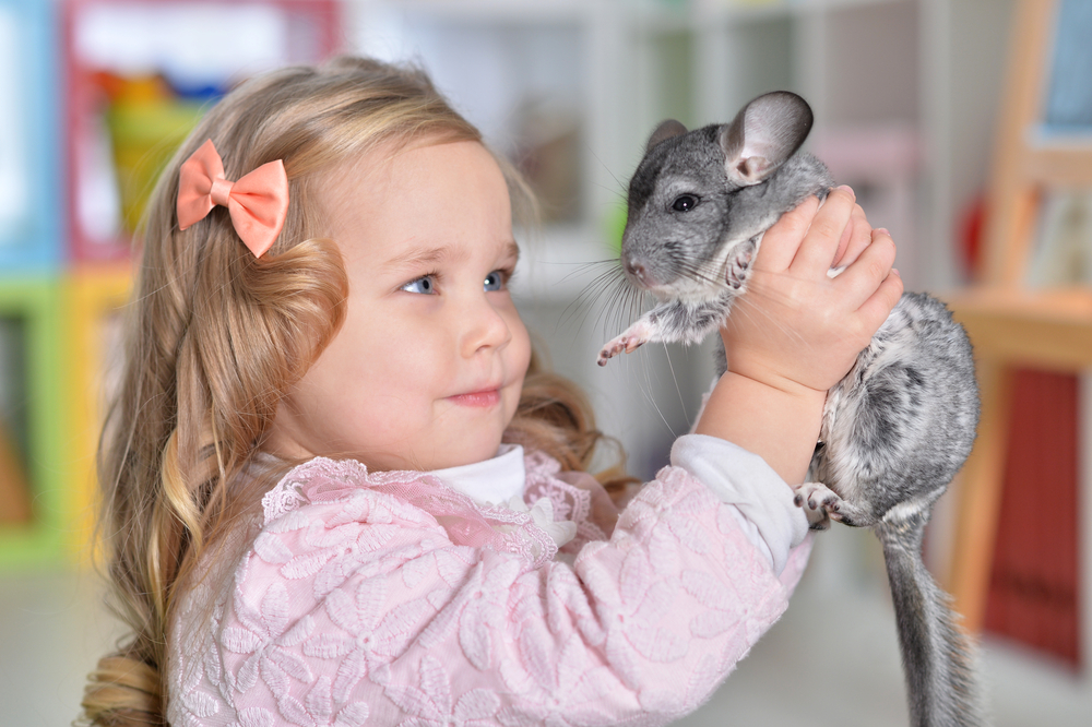 5 Best Chinchilla Food You Should Know